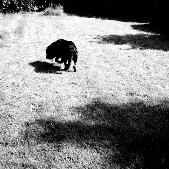 L'ombre et le chien