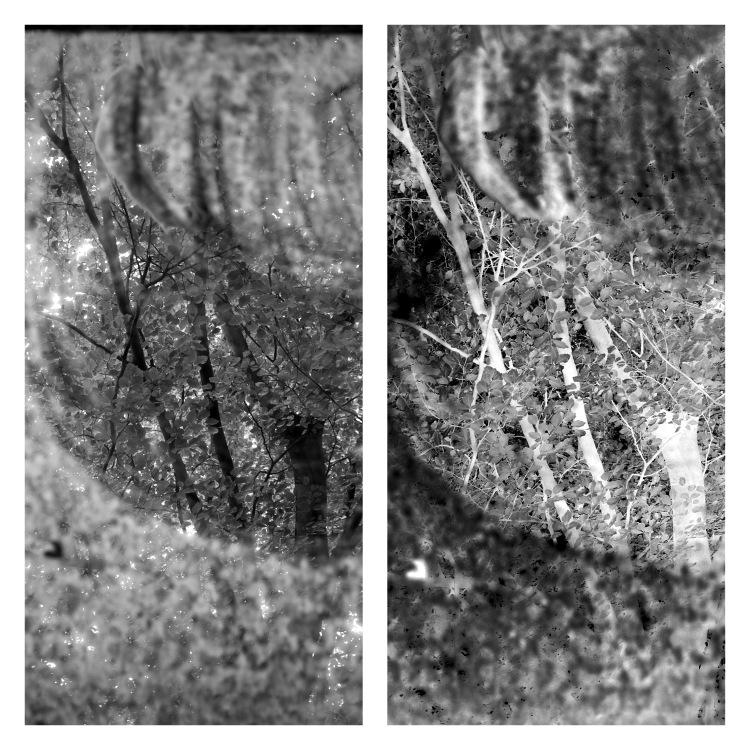 Empreintes de paysage dans son nid